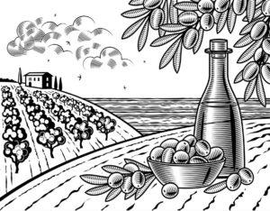 IL DIVINO Extra Virgin Olive Oil
