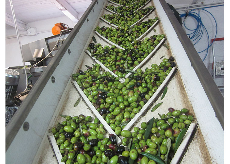 Cleaning Olives