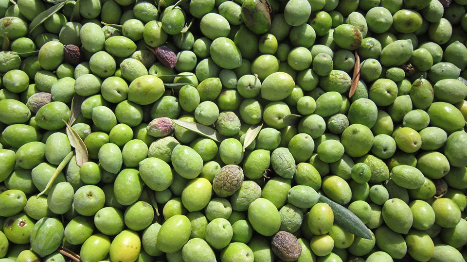 2015 To Be An Excellent Year For Olive Oil