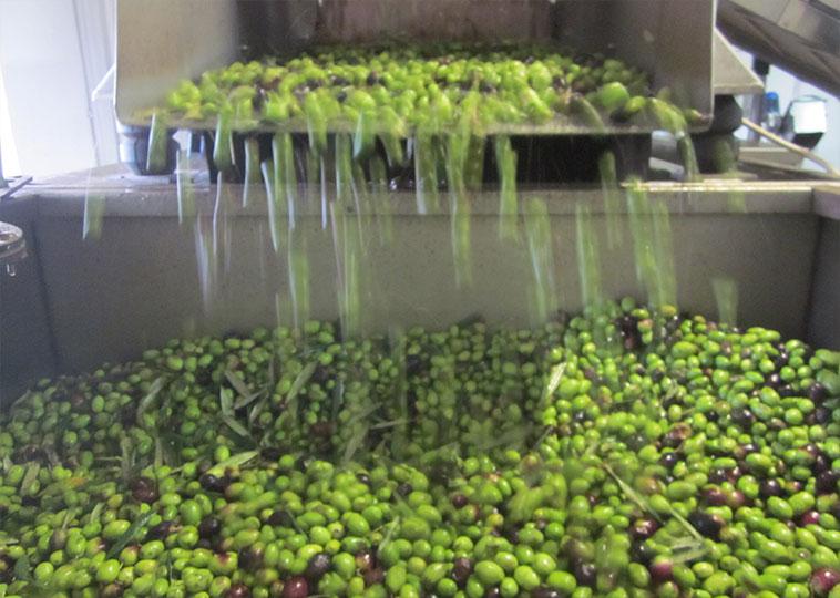 Inspect Olives